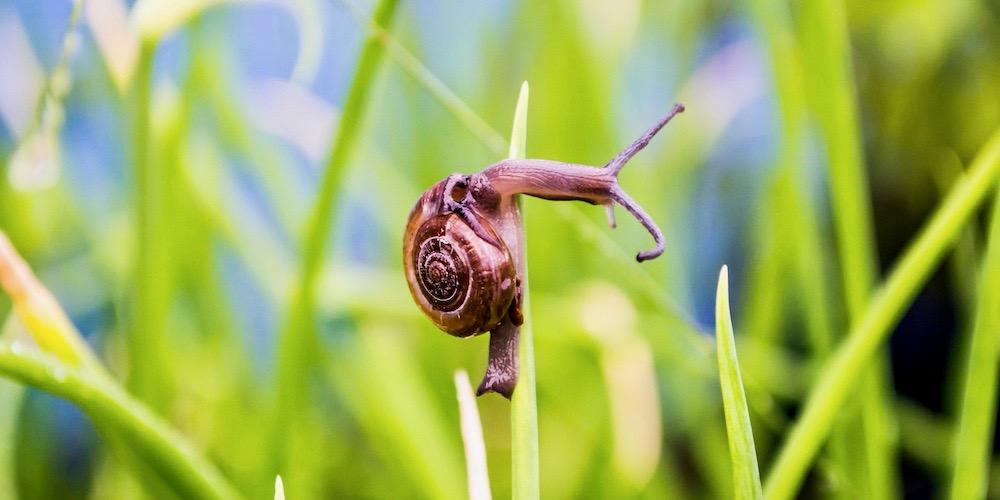 ślimak w trawie symbol slowfood